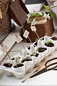 Seedlings sewn in eggshells with forks used as plant markers