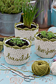 Crocheted plant pot covers with embroidered plant names