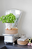 Stacked wooden plates and potted basil plant on kitchen scales