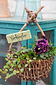 Purple violas and wire vine planted in basket