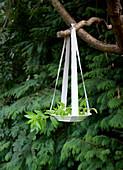 Zweig und Teller mit gerissenen Stoffstreifen am Baum aufgehängt