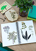 Ring-binder with pressed plants as a herbarium