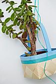 Geldbaum in einem bemalten Spankörbchen als Blumenampel
