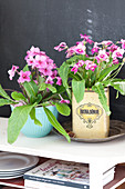 Streptocarpus planted in old tin and blue bowl
