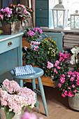 Verschiedene Blumen in Rosa und Pink an einem Schreibtisch in Blau