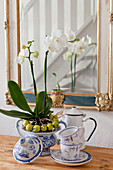 White orchid in wreath of crabapples arranged in sauce boat