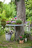 Flowering plants on folding metal table below tree in garden