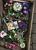Frühlingsblumen, Geschenk und Ostereier in einer Holzkiste mit Holzwolle