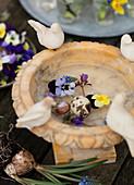Quail egg, spring flowers and snail shell in a bird bath