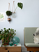 Homemade hanging baskets with glasses and leather cords over a pilea