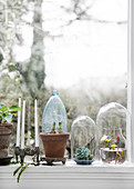 Glass bells and plastic bottle as mini greenhouses on the window sill