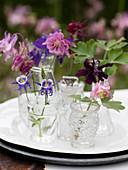 Various columbines in pink, violet and lilac in glass vials