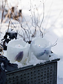 Homemade ice lanterns with frozen tulips and grape hyacinths