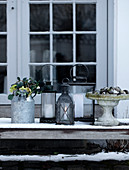 Lanterns and tin can with Christmas roses in the garden