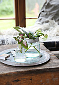Cuttings in glass jars on table
