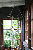 Glass bottles with branches hanging from ceiling beams