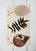 Gift tags with dried and pressed leaves