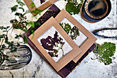 DIY pictures with dried autumn leaves