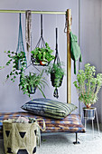 Green house plants in hanging baskets hung from clothes rack
