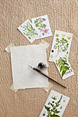 Botanical pictures with wild herbs