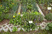 Herbs, flowering plants and vegetables growing in permaculture bed