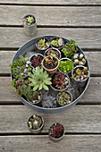 Succulents planted in tin cans on round metal tray