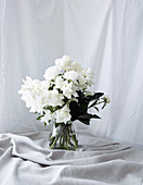 White roses and green leaves in glass vase