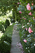 Path leading between topiary box bushes and climbing roses