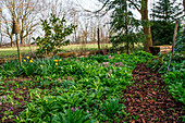 Wild garlic, larkspur and daffodils in the spring garden
