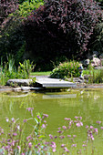 Pond with jetty in summery garden