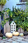 Autumn decoration with pumpkins and hop vine