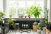 Delicate metal chair and various houseplants in window