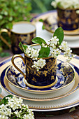 Bird cherry blossom in antique cup