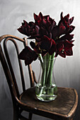 Bouquet of 'Black Pearl' Amaryllis