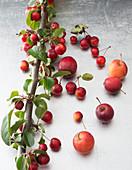 Äpfel und Miniäpfel am Ast als Dekomaterial für Gestecke und Tischschmuck