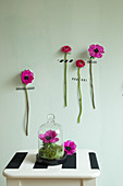 Hot-pink flowers with stems stuck on green wall, anemone under glass cover