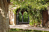 Archway overgrown with rambler rose