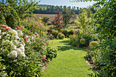 Grass path between beds with hydrangeas and roses