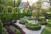 Knot garden in spring with pheasant's-eye daffodils, artfully cut hedge