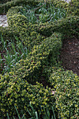 Knot garden with Japanese pod in early spring