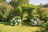 Lawn path leading through tunnel of pergolas flanked by hydrangea 'Annabelle'