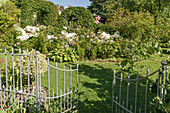View through the open garden gate of the bed with roses, hydrangea 'Annabelle' and hostas