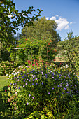 Perennial bed in late summer with aster, knotweed and hydrangea, pergola with trumpet winch