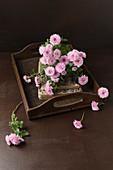 Rosafarbene Astern auf antikem Holztablett