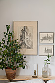 Houseplant on narrow console table below etchings on wall