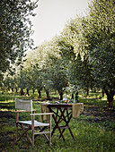 Outdoors setting, chair, table, grass, olive trees, fields