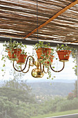 Old brass chandelier repurposed as decorative plant holder