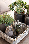 Planted arrangement of succulents and owl ornament on wicker tray