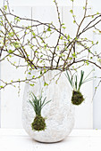 Budding branches arranged in vase with snowdrops suspended in moss balls