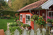 Red summerhouse with vegetable patch in late summer garden